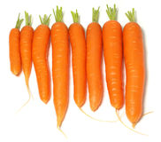 Carrots in a Line Stock Image