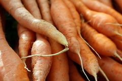 Carrots. At the local grower's market Royalty Free Stock Images