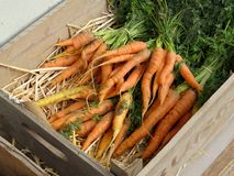Carrots lying in a bed of straw in a wooden box