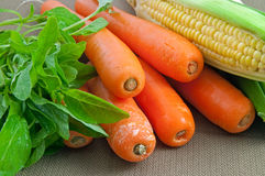 Carrots, maize and vegetables Stock Images