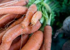 Carrots in the market Stock Photography