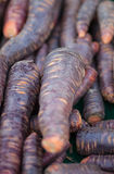 Carrots on market Stock Photography