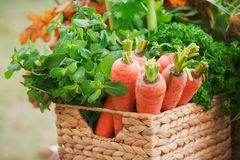 Carrots, mint and parsley in a basket Stock Photography