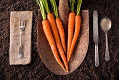 Carrots. Organic farm to table healthy eating concept on soil background Royalty Free Stock Image