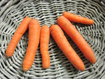 Carrots. Organic carrots in a rustic basket Royalty Free Stock Photo