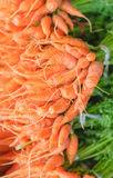 Carrots organic Stock Photo Stock Image