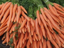 Carrots. A pack of fresh harvested red carrots Stock Images
