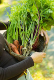 Carrots, parsleys and beetroots in a basket Stock Photos