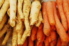Carrots and parsnip Stock Images