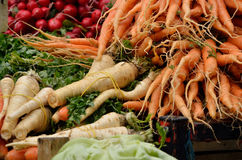 Carrots, Parsnip and Radishes in Spring. Organic carrots tied in spring time with parsnip and a pile of fresh organic radishes Royalty Free Stock Image