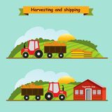 Carrots. Collection and delivery of the crop. Vector illustratio. Carrots, plant growth cycle. Collection and delivery of the crop. Vector illustration Stock Photo