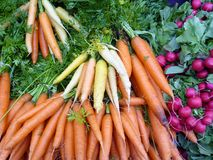 Carrots and radishes at a market Stock Image
