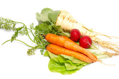 Carrots, radishes and  parsnip with green lettuce Stock Photography