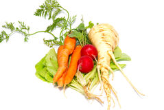Carrots, radishes and  parsnip with green lettuce Stock Photo