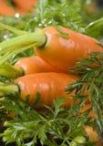 The carrots & rain Stock Photography