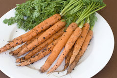Carrots recently pulled from ground on plate Royalty Free Stock Images