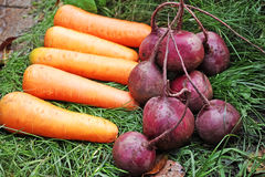 Carrots and red beets Royalty Free Stock Photography