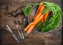 Carrots roots with green leaves. Vegetable. Vintage style food c Royalty Free Stock Image