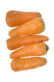 Carrots in a row Stock Images