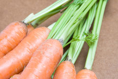 Carrots with stems Stock Photography