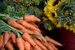 Carrots And Sunflowers. Bunches of carrots and sunflowers at the farmers market Stock Image