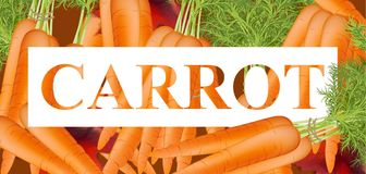 Carrots text background. Vector template detailed realistic illustration Stock Photo