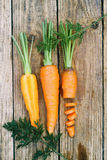 Carrots, top view Royalty Free Stock Photography