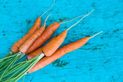 Carrots with tops of vegetable beam on a blue wooden background Royalty Free Stock Images