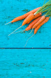 Carrots with tops of vegetable beam on a blue wooden background Stock Photos