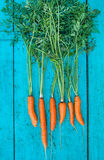 Carrots with tops of vegetable beam on a blue wooden background Royalty Free Stock Photography