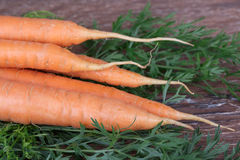 Carrots with tops Royalty Free Stock Photo