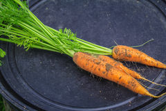 Carrots torn from earth and lies on a black background. Stock Photos