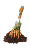 Carrots and trowel Royalty Free Stock Photo