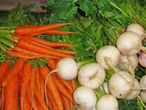 Carrots and turnips Stock Images