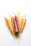 Carrots in variety Royalty Free Stock Images