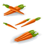The Carrots Stock Image