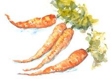 Carrots on white Royalty Free Stock Photo