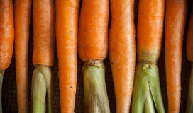 Carrots on a wooden background Stock Photos