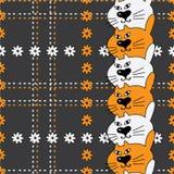 Carroty und weiße Katzen Lizenzfreie Stockbilder
