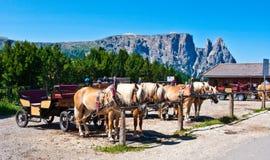 Carrozza a cavalli, Alpe di Siusi, Italia Fotografia Stock Libera da Diritti