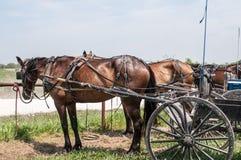 Carrozzini dei Amish Fotografia Stock Libera da Diritti