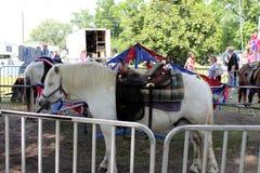 Carrusel del caballo Foto de archivo