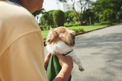 Carrying dog Royalty Free Stock Image