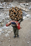 Carrying firewood stock photos