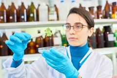 Carrying out Quality Control of Vegetables. Hard-working young researcher wearing eyeglasses and white coat carrying out quality control of vegetables while Stock Photography