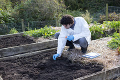 Carrying out a soil analysis. Young man testing soil in an allotment. He has a digital tablet with him for research Royalty Free Stock Photos