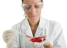 Carrying out test in laboratory Stock Image