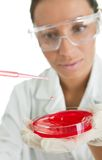 Carrying out test in laboratory Royalty Free Stock Image
