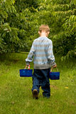 Carrying two backets of cherries Royalty Free Stock Photos