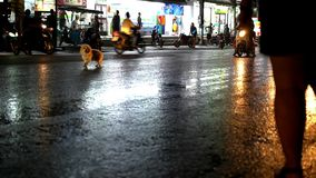 Cars drive and the dog runs unhinged on a wet road Stock Image